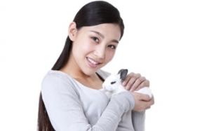 The pet called netherland dwarf rabbit