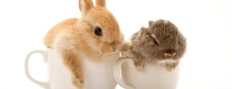Be Familiar with Popular Breeds of Rabbits