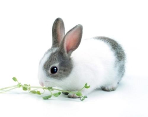 rabbit20_a