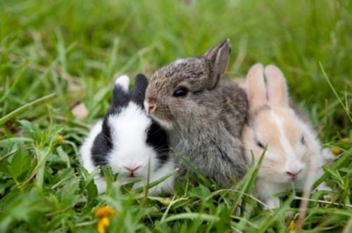 rabbit23_a
