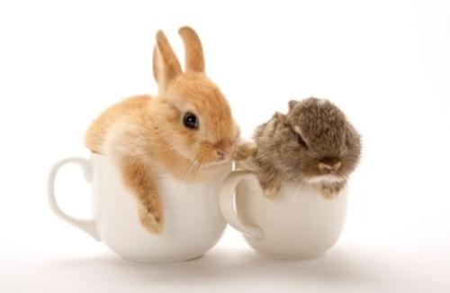 rabbit34_a