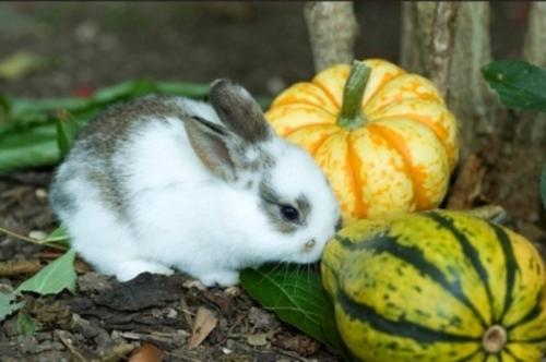 rabbit39_a