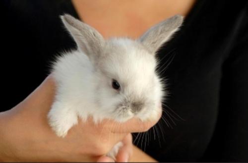 rabbit45_a