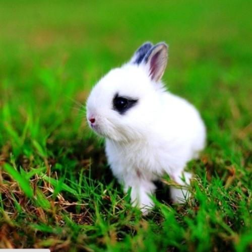 rabbit54_a