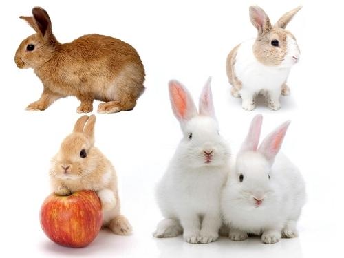 rabbit59