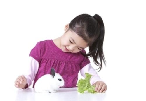 rabbit22-a