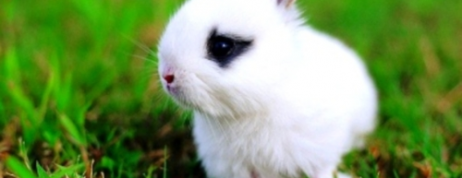 Dutch Rabbits for Sale – Valuable Information for Pet Lovers
