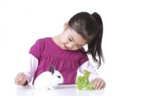 The correct way for dwarf rabbit care
